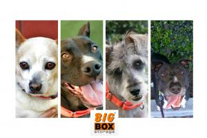 Big Box Sponsors 4 dogs at San Diego Humane Society